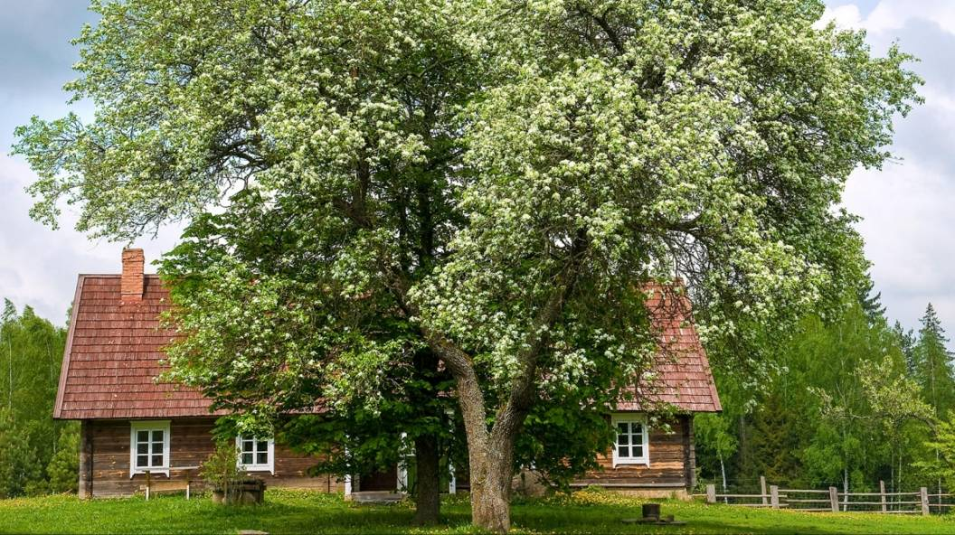 Atviros dienos kaime – gyvos tradicijos ir paveldas